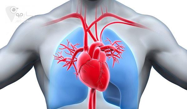 متخصص قلب شیراز متخصص قلب در شیراز آدرس متخصص قلب در شیراز پزشکان متخصص قلب شیراز