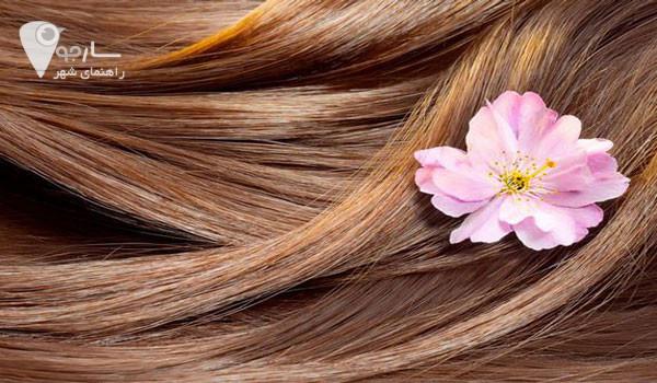 درمان ریزش با با دارو های گیاهی ساده ترین راه برای حفظ موهایتان است.