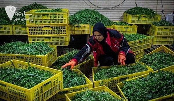 اسم سبزی مارکت شیراز