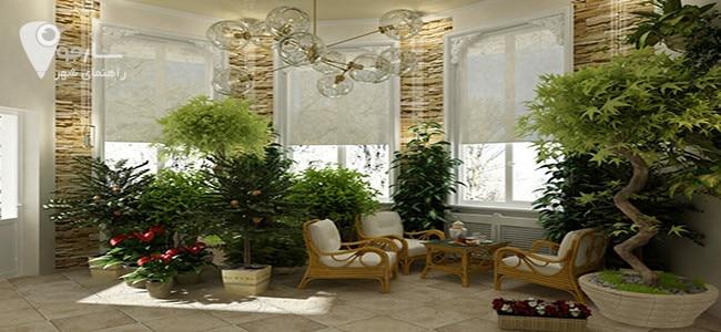 نحوه نگهداری از گلهای آپارتمانی را با نور کافی مد نظر داشته باشید.