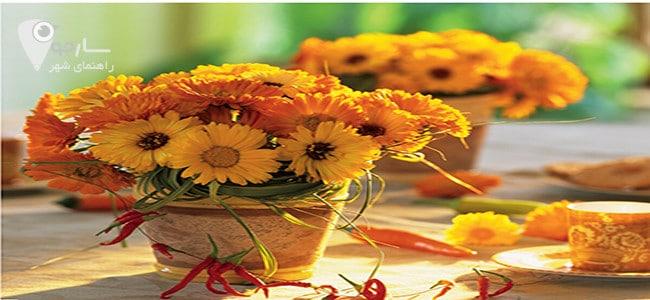 گل همیشه بهار از گل های آپارتمانی است