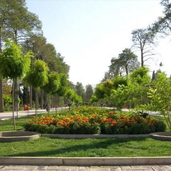 پارک کاج شیراز